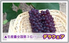 大阪産デラウエアは生産量全国第3位です!