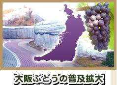 大阪ぶどうの普及拡大