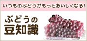ぶどうの豆知識