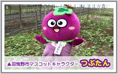 羽曳野市マスコットキャラクター「つぶたん」