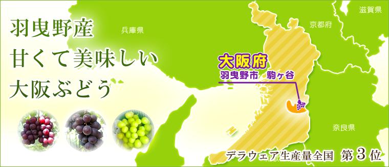 大阪府羽曳野市駒ヶ谷の甘くて美味しい大阪ぶどう