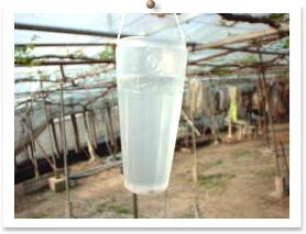 ジベレリンの100ppm水溶液