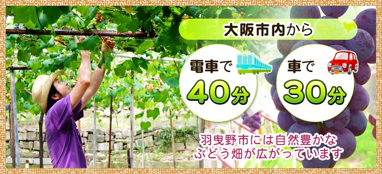 羽曳野市のぶどう畑「葡萄園たちばなや」は大阪市から電車で40分、車で30分